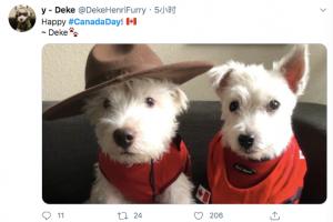 笑疯了!加拿大人花式庆国庆!痛饮+钓鱼